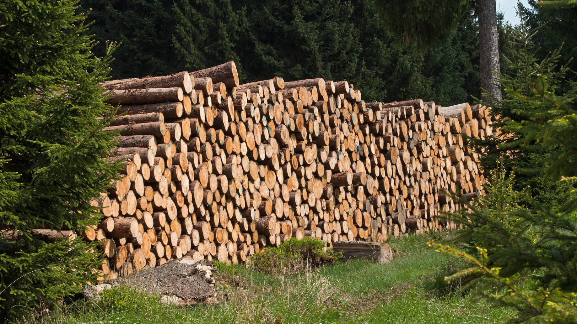 Holzstapel in der Natur